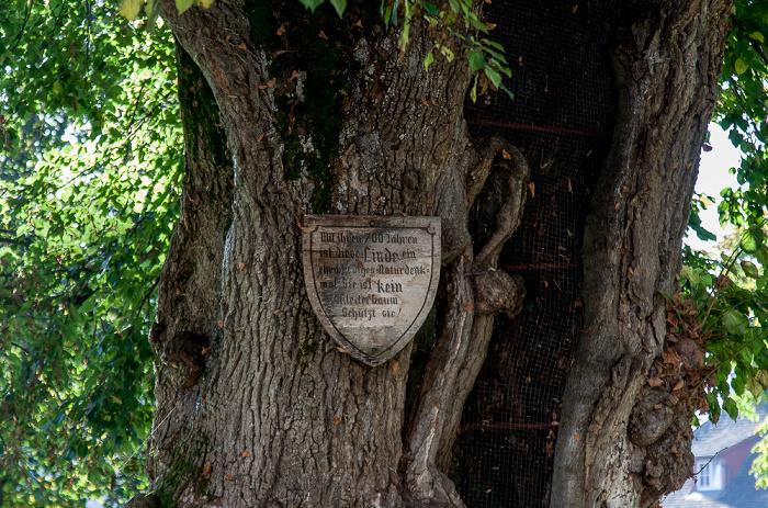 Reichenau Mittelzell: Etwa 700 Jahre alte Linde