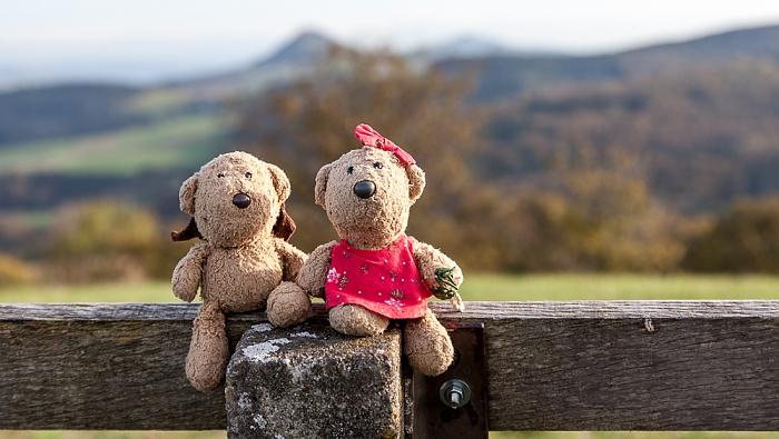 Engen Hegaublick: Teddy und Teddine