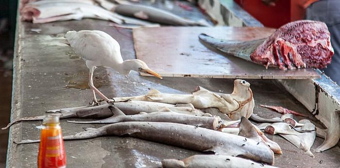 Victoria (Seychellen) Sir Selwyn Selwyn-Clarke Market: Fischverkauf mit Vogel