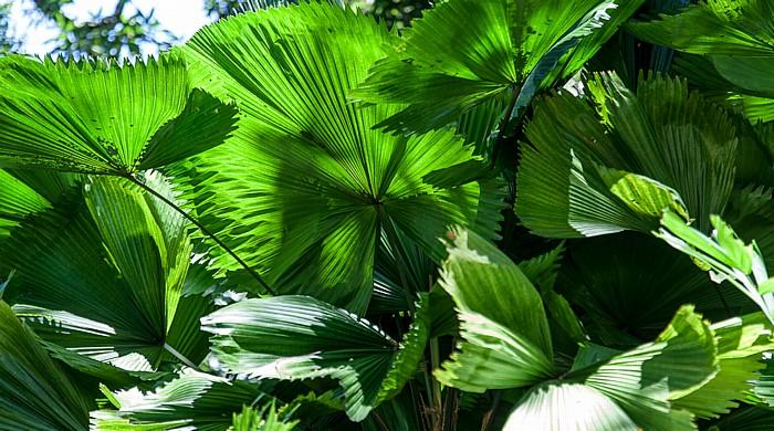 Victoria (Seychellen) Mont Fleuri Botanical Gardens