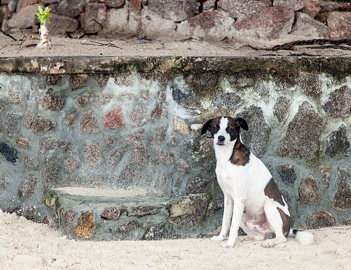 Beau Vallon Beach: Strandhund