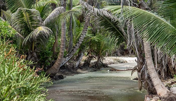 La Digue Zwischen Grand Anse und Petit Anse