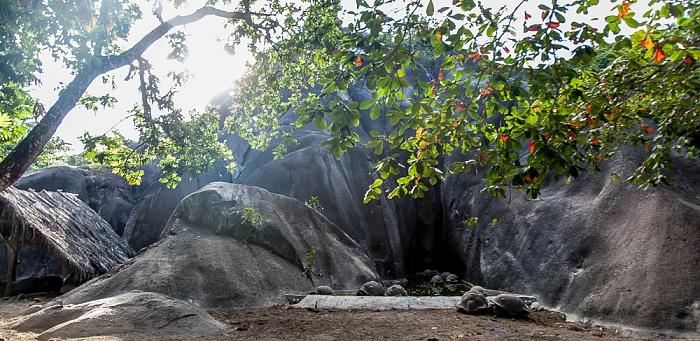 La Digue L'Union Estate: Aldabra-Riesenschildkröten (Aldabrachelys gigantea)