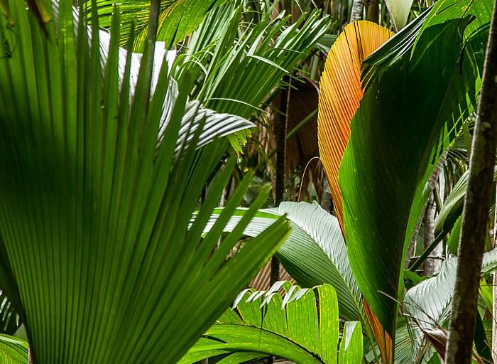 Praslin Vallée de Mai