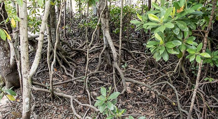 Curieuse Mangroven