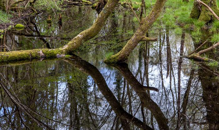 Dumfries Caerlaverock National Nature Reserve