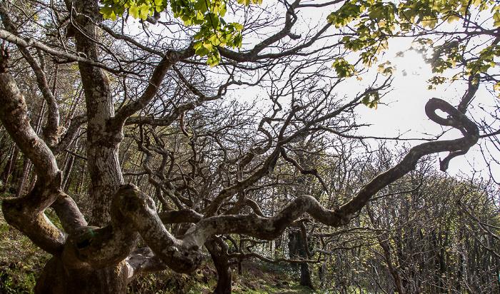 Maybole Culzean Castle Country Park