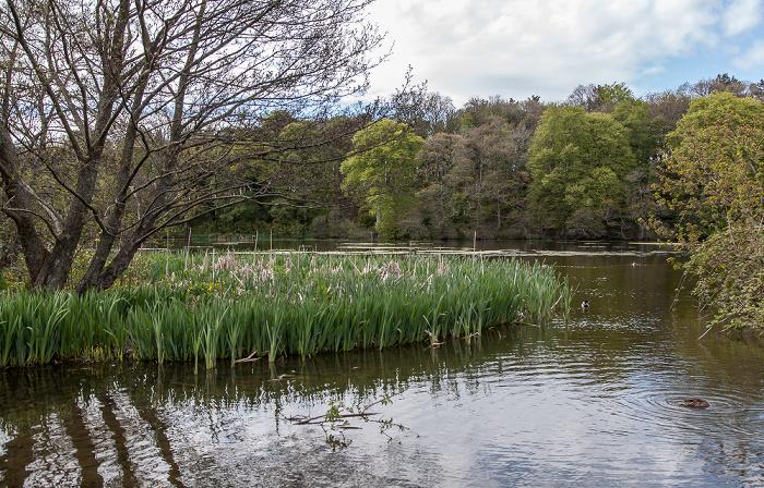 Maybole Culzean Castle Country Park: Swan Pond
