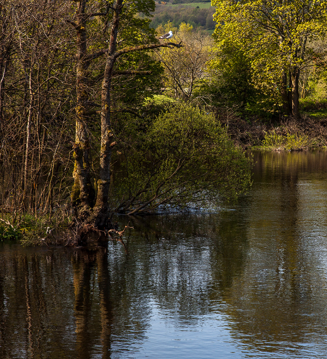 Balloch Loch Lomond and The Trossachs National Park: River Leven