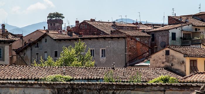 Blick vom Befestigungswall (Mura di Lucca) Torre Guinigi