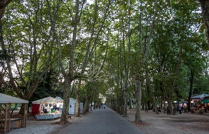 Pineta di Viareggio: Viale Capponi