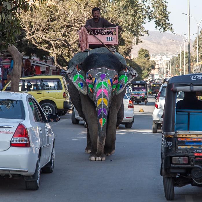 Jaipur Pink City: Amer Road - Bunter Elefant