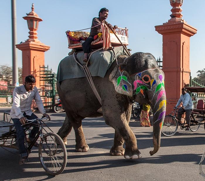 Jaipur Pink City: Bunter Elefant