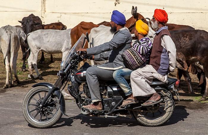 Pushkar Drei Inder auf einem Moped
