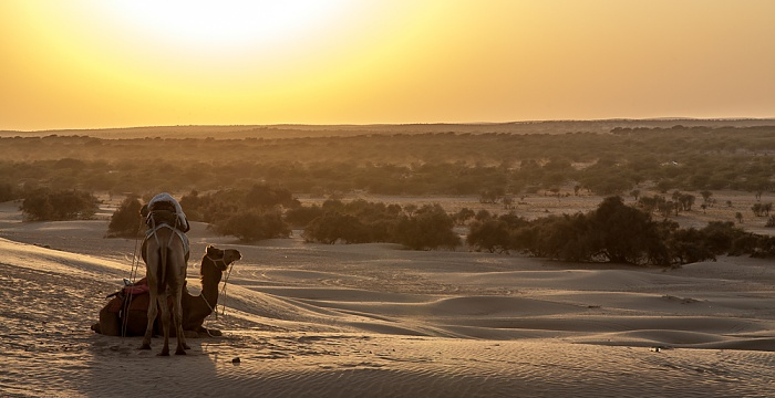 Khuri Wüste Thar (Desert National Park): Kamel, Sanddünen