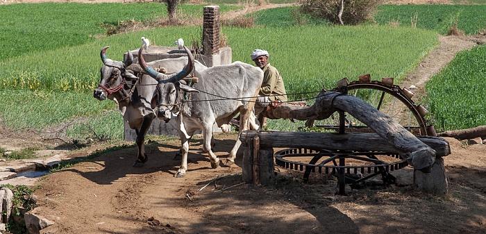 Bishma Wasserbrunnen mit Rinder-Pumpantrieb