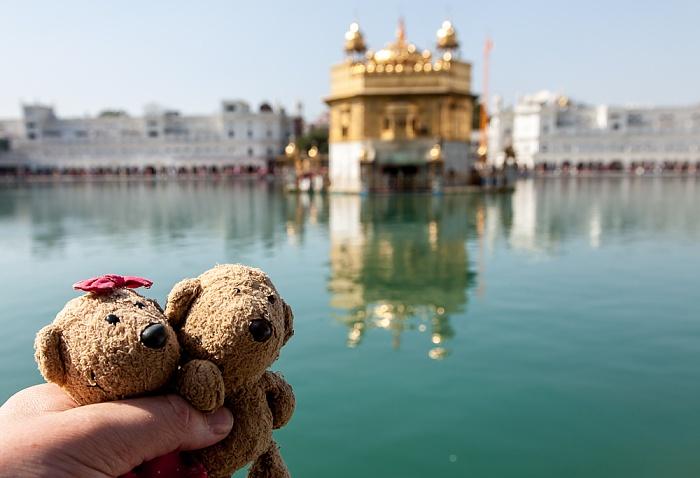Amritsar Golden Temple Complex: Teddine und Teddy