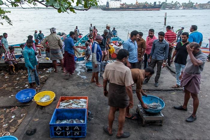 Fort Kochi: Verkauf des frischgefangenen Fischs Vembanad Lake