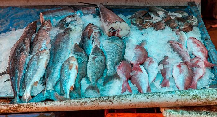 Fort Kochi: Frischgefangener Fisch