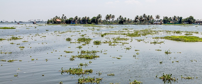Backwaters Vembanad Lake