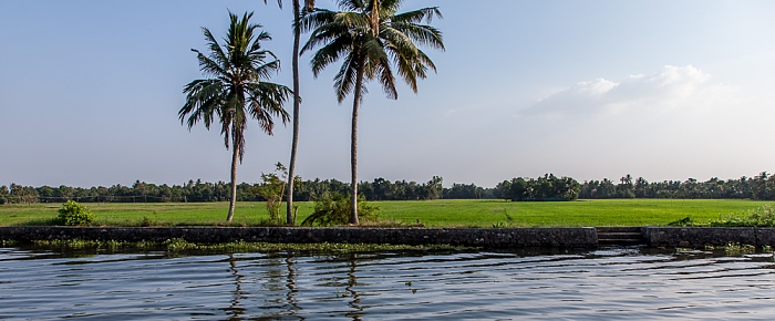 Backwaters Reisfelder