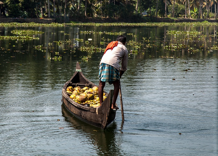 Backwaters Pamba River