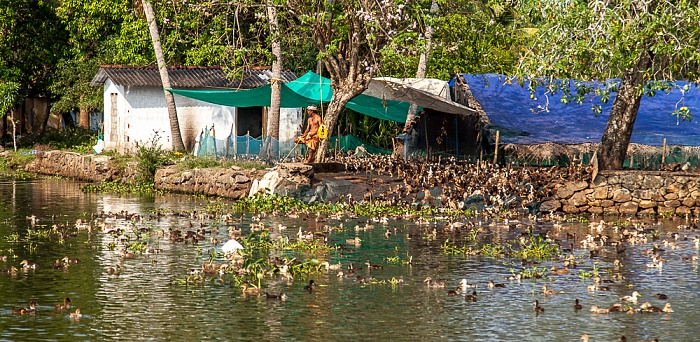 Backwaters Kollam-Kottapuram Waterway: Enten