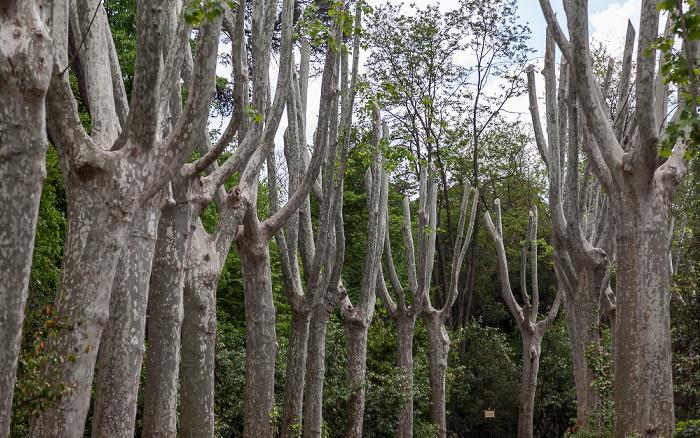 Madrid Campo del Moro