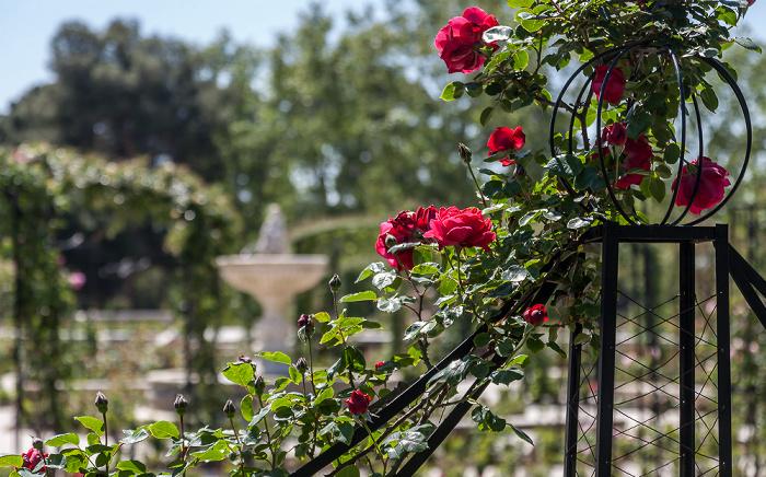 Parque del Retiro: Rosaleda del Retiro Madrid 2016