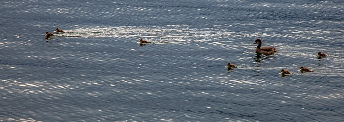 Bardolino Gardasee: Ente mit Kindern