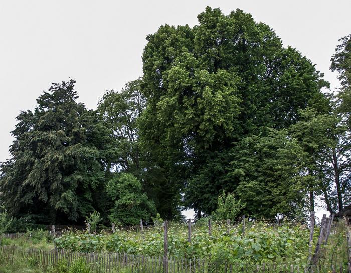 Fraueninsel Lindenhain: Tassilolinde und Marienlinde (mehr als 1000 Jahre alte Bäume)