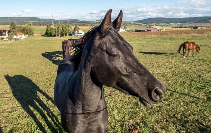 Pfohren Kopen: Pferdekoppel