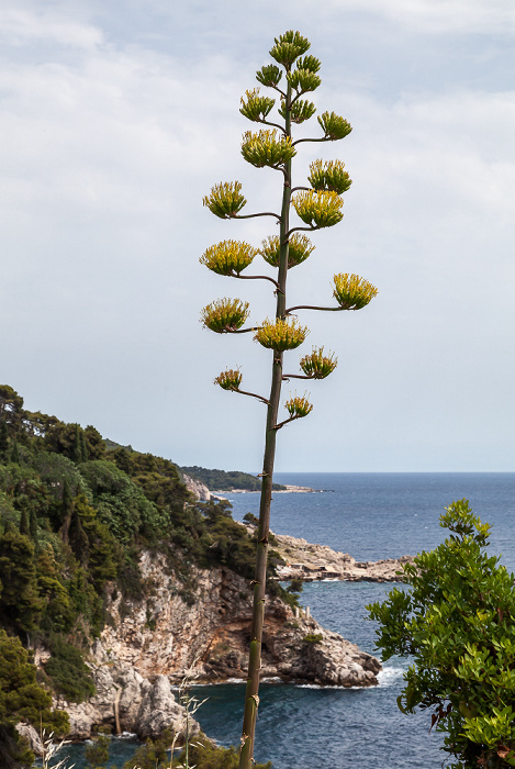 Blick von der Ulica branitelja Dubrovnika: Adriatisches Meer (Mittelmeer) Dubrovnik