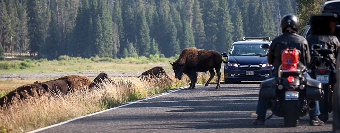 Yellowstone National Park Lamar Valley (Soda Butte Creek): Bison auf der U.S. Route 212 (Northeast Entrance Road)