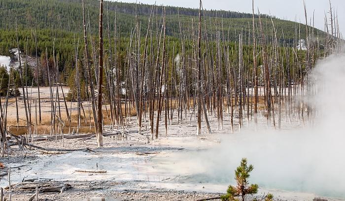 Norris Geyser Basin: Back Basin - Cistern Spring Yellowstone National Park