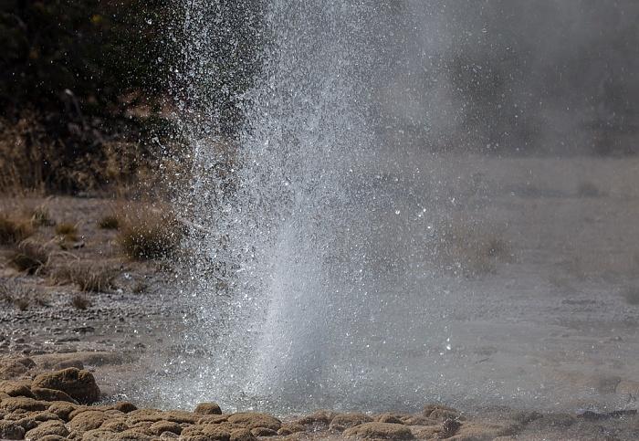 Norris Geyser Basin: Back Basin - Vixen Geyser Yellowstone National Park
