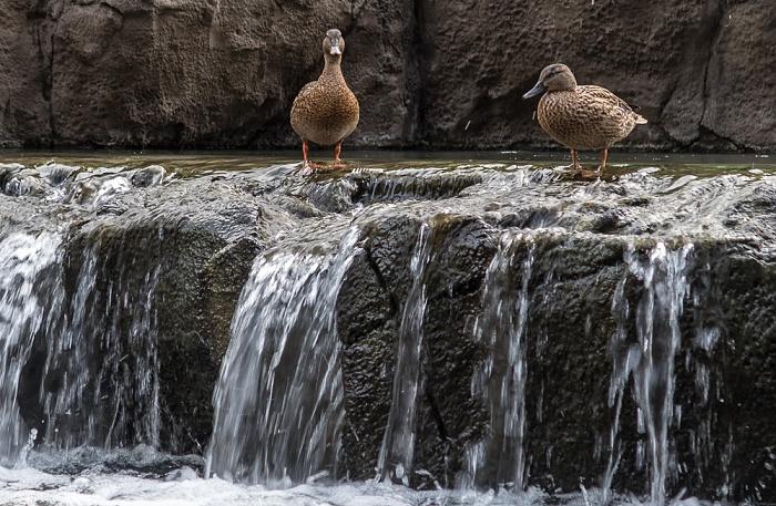 Honolulu Daniel K. Inouye International Airport: Cultural Gardens - Wasserfall