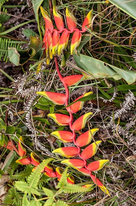 Koke'e State Park Kalalau Lookout