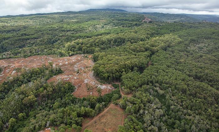 Blick aus dem Hubschrauber: Puu Ka Pele Forest Preserve Kauai