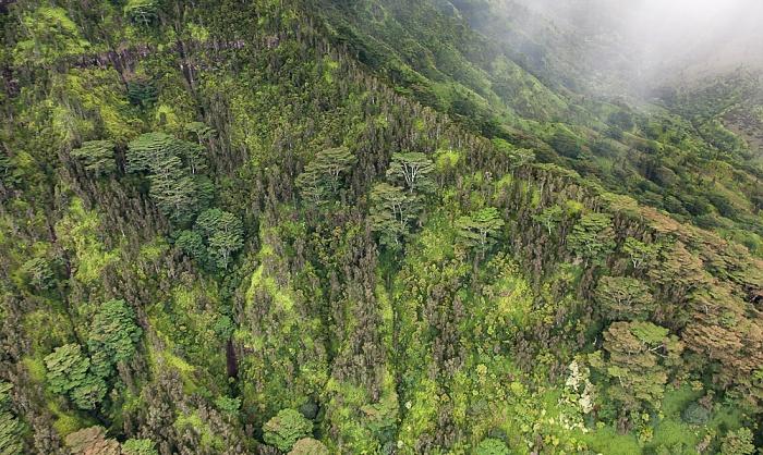 Blick aus dem Hubschrauber: Halelea Forest Reserve Kauai