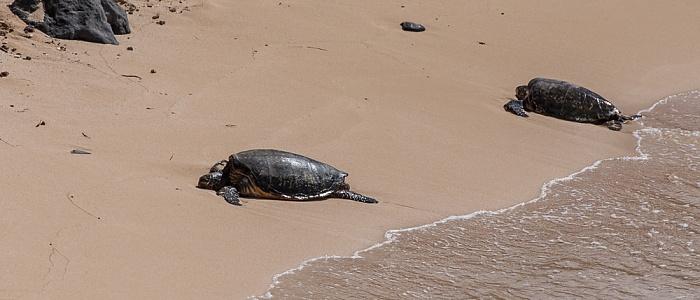 Maui Hana Highwayy: Ho'okipa Beach Park - Meeresschildkröten