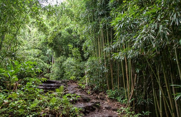 Haleakala National Park Kipahulu Section: Pipiwai Trail - Bambuswald
