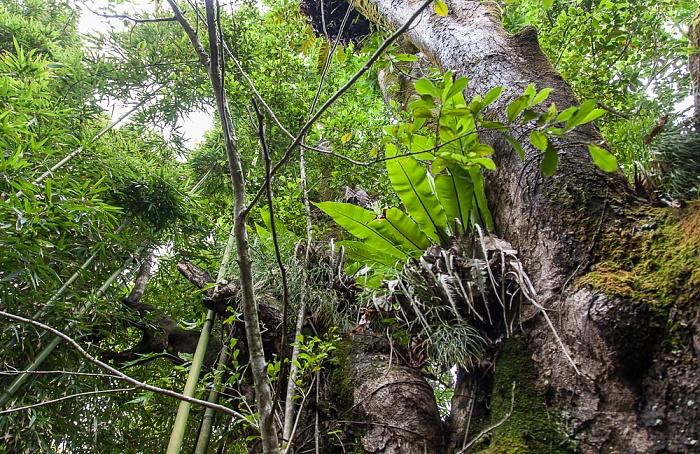 Haleakala National Park Kipahulu Section: Pipiwai Trail