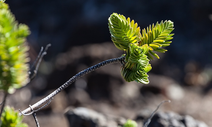Haleakala National Park Haleakala Crater (East Maui Volcano)