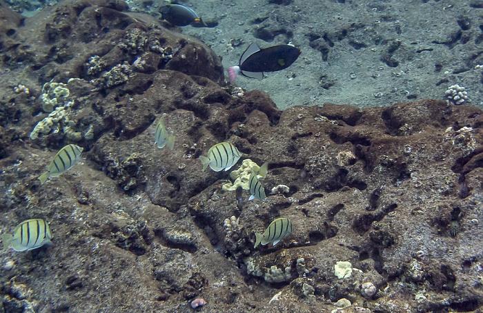 Molokini Alalakeiki Channel (Pazifik)