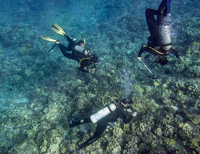 Alalakeiki Channel (Pazifik): Taucher Molokini