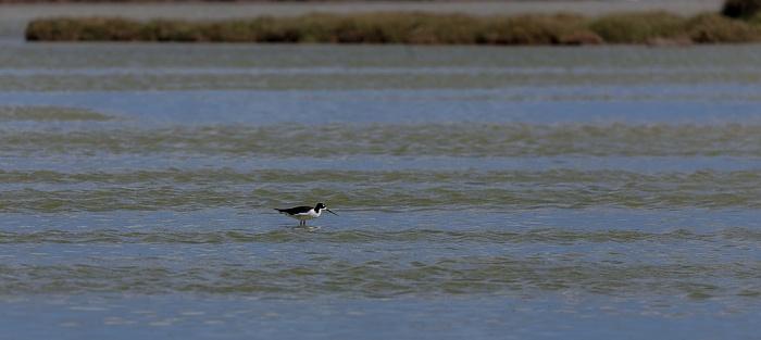 Kahului Kanaha Pond State Wildlife Sanctuary