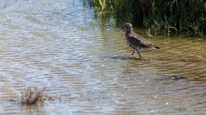 Kanaha Pond State Wildlife Sanctuary Kahului