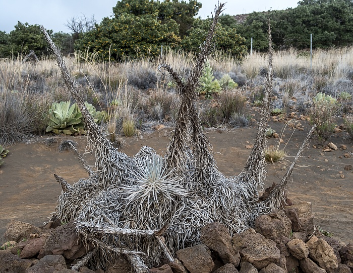Mauna Kea State Park