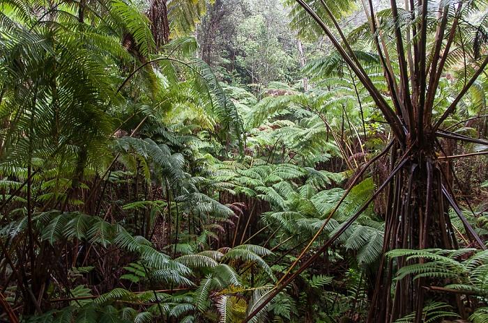 Chain of Craters Road: Tropischer Regenwald Hawaii Volcanoes National Park